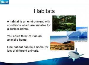 Sea Life Habitats
